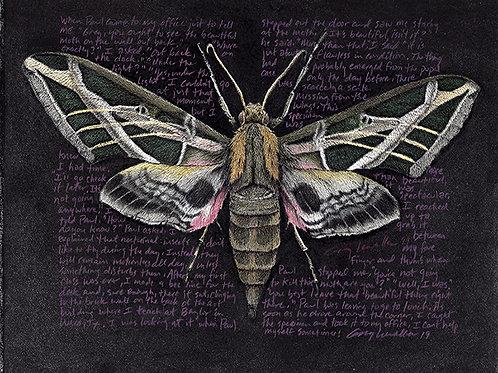 "Eumorpha vitis, 8x10"" Limited Edition Print"