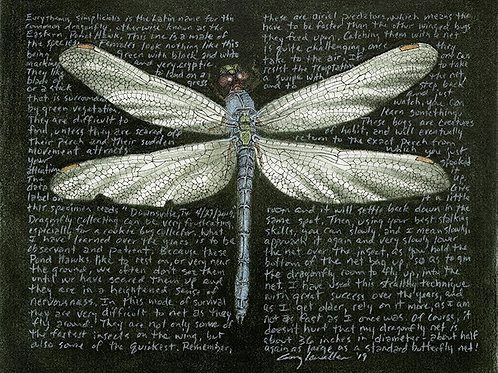 "Erythemis simplicicolis, male 8x10"" Limited Edition Print"