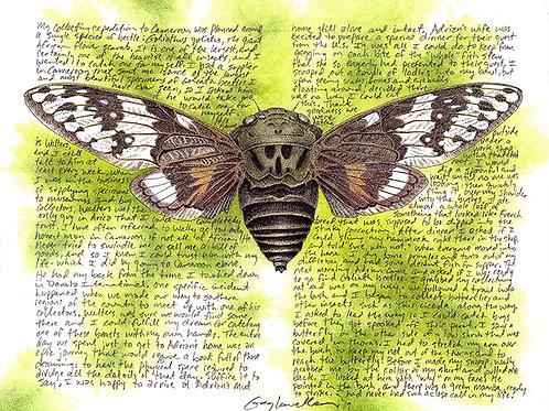 "Cameroon Cicada 8x10"" Limited Edition Print"