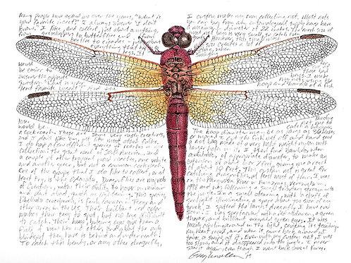"Libellula croceipennis 8x10"" Limited Edition Print"