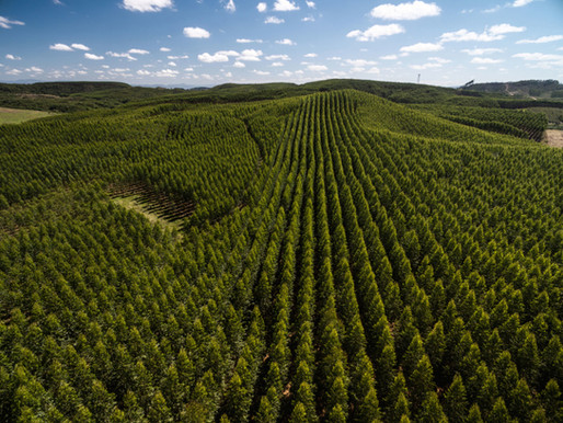 Why Green Pledges Will Not Create the Natural Forests We Need?
