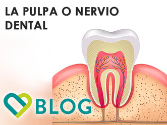 LA PULPA O NERVIO DENTAL