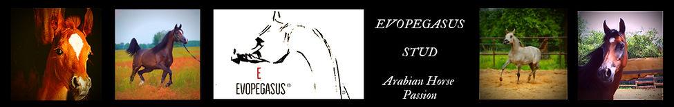EvoPegasus STUD Web Banner 2019 1000-160