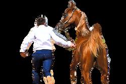 Sharada EVOPEGASUS - Atinthod 2021, 1e Place Concours Endurance pouliches 2 ans, Crédit Ph