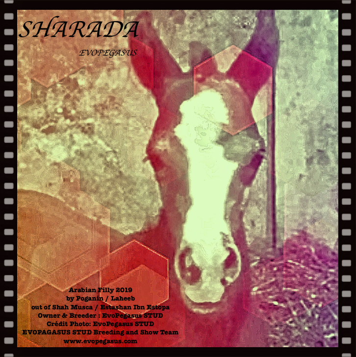 SHARADA EVOPEGASUS - Golden Cross