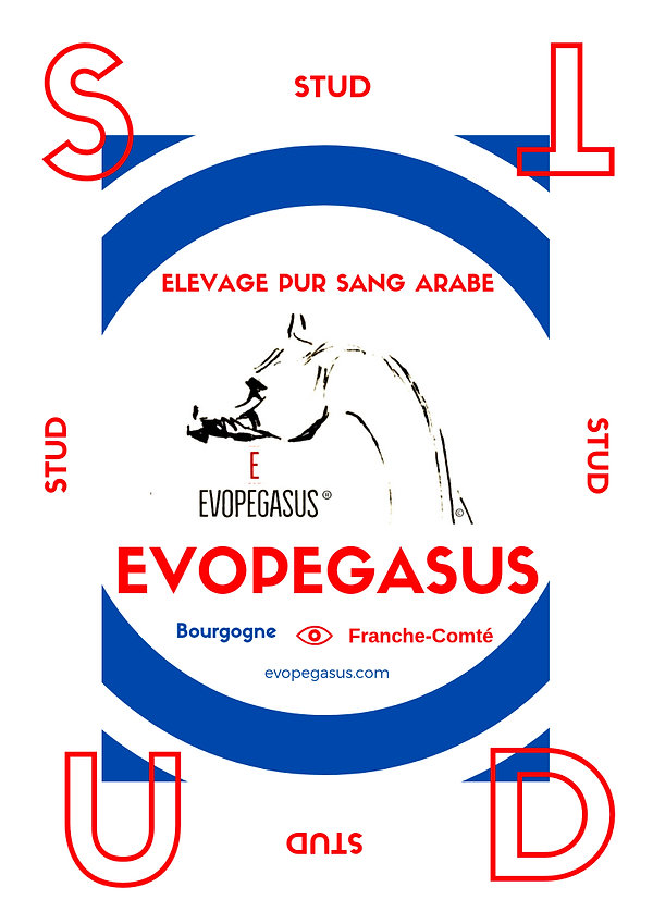 EVOPEGASUS STUD, Marque Déposée, ELEVAGE PUR SANG ARABE, QUALITY POLISH ARABIANS COLLECTION in POLAND and FRANCE