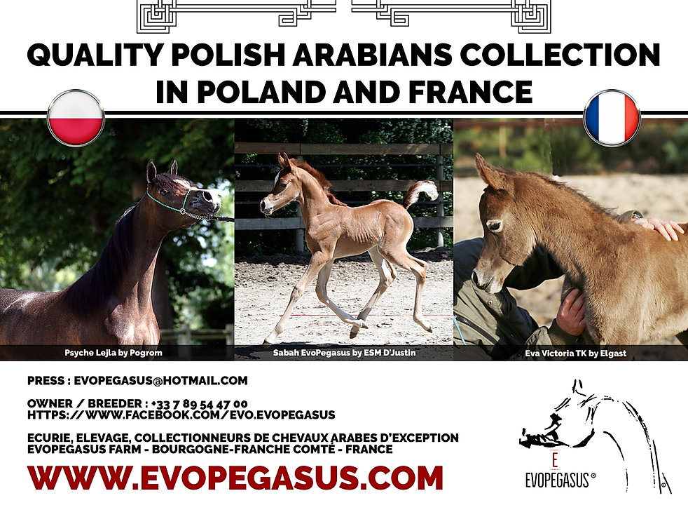 EvoPegasus Marque déposée QUALITY POLISH ARABIANS COLLECTION IN POLAND AND FRANCE Credits photos Urszula Leczycka / EvoPegasus by WEBMAXX