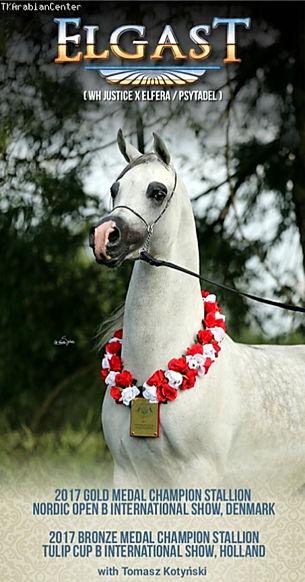 Elgast Arabian Stallion EvoPegasus Marque déposée Elevage Cheval Arabe Psyche Lejla Eva Victoria TK