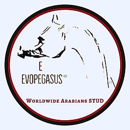 LOGO EVOPEGASUS WORLDWIDE ARABIANS STUD Marque déposée, ©
