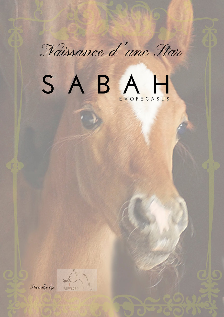 SABAH EVOPEGASUS ARABIAN FILLY 2018 by ESM D'JUSTIN / WH JUSTICE out of SHAH MUSCA / ESTASHAN IBN ESTOPA OWNER & BREEDER EVOPEGASUS
