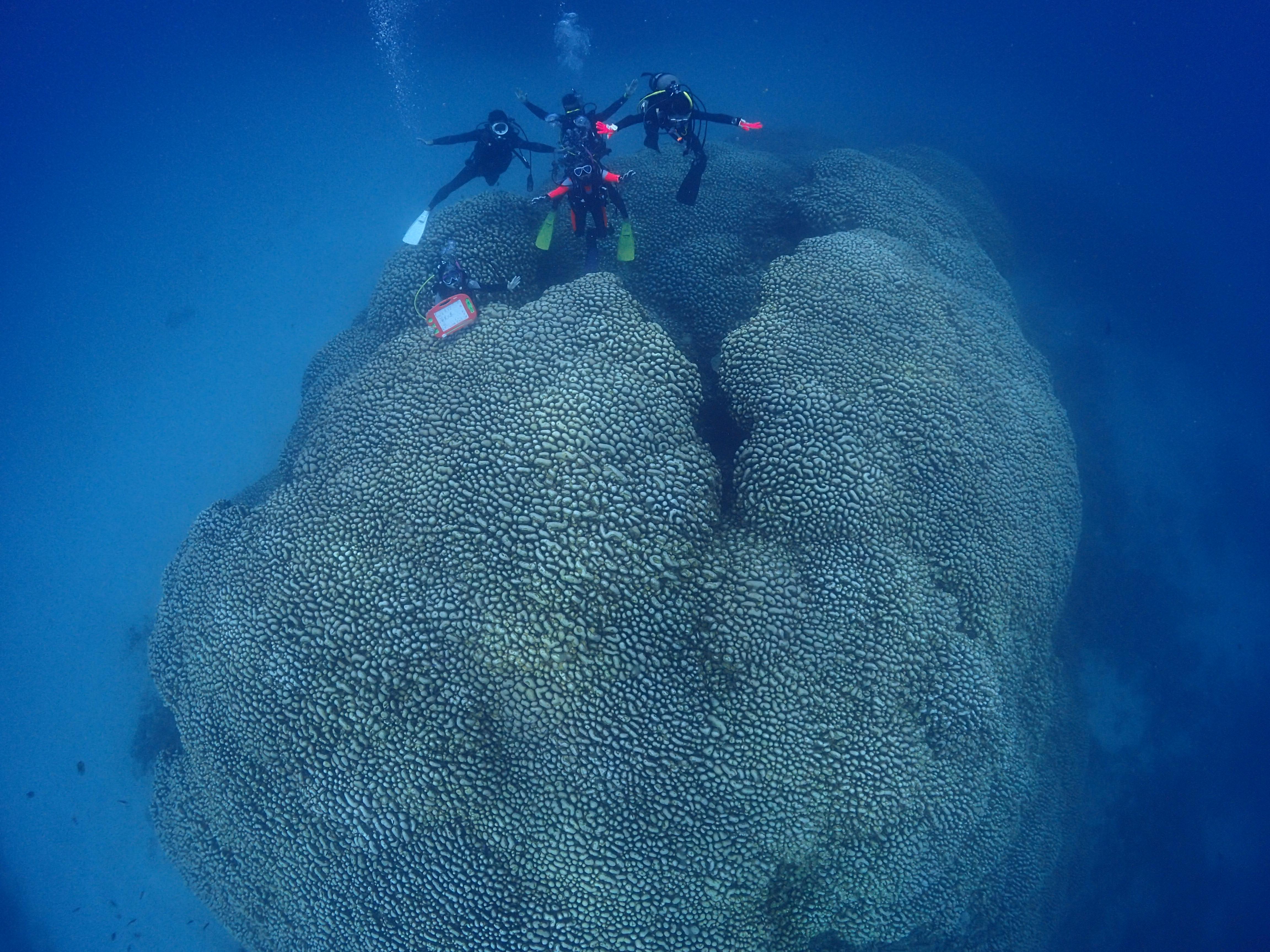 奄美の大仏サンゴ