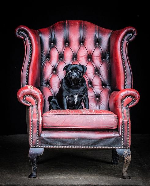 Dog Photographer Andy Biggar-20.jpg
