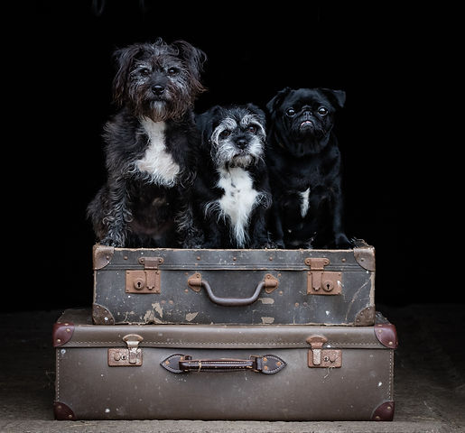 Dog Photographer Andy Biggar-32.jpg