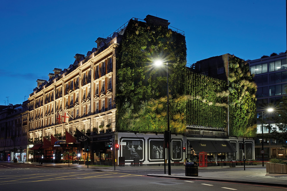 one of London's largest Living Walls at The Rubens at the Palace, standing at 350 square meters and with a total of 10,000 herbaceous plants, providing a wildlife habitat for the city's bees, butterflies and birds.