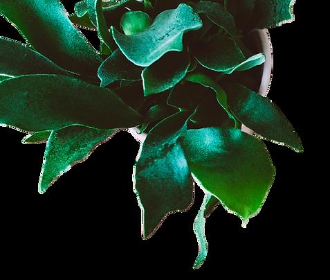 macetacon planta verde