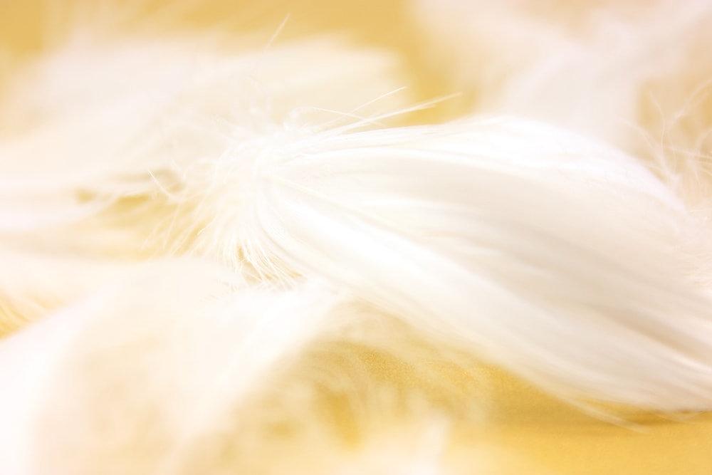 羽毛ふとんのリフォームとクリーニング