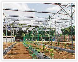 太陽光発電+農業