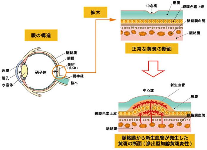 眼の構造 イメージ画像