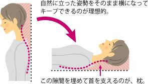 枕はなぜ必要?・・・首筋の隙間を埋めて頭から首を支える。