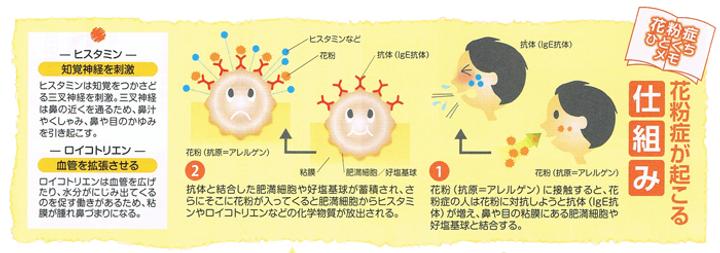 花粉症が起こる仕組み