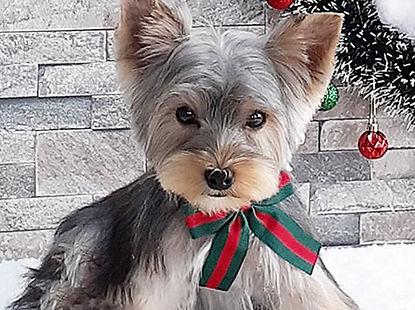 モデル犬 写真