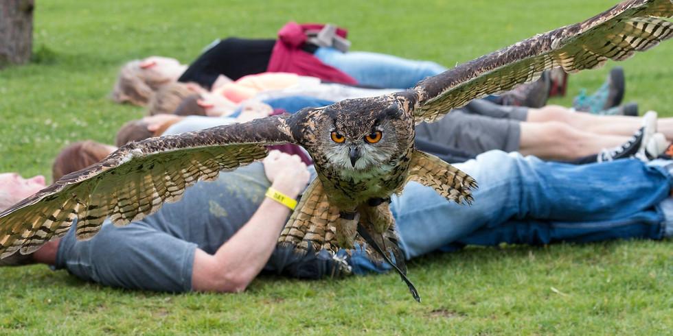 Bird of Prey Photography Day