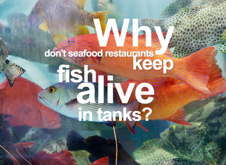 Why Don't Seafood Restaurants Keep Their Fish Alive in Tanks?