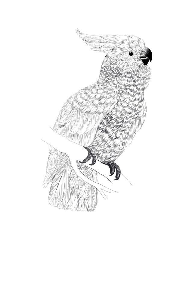 Charming Cockatoo