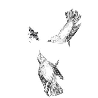 Warblers Illustration