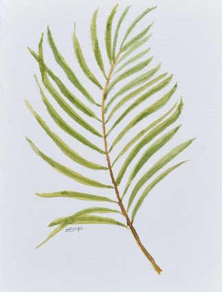 Palm Leaf.JPG
