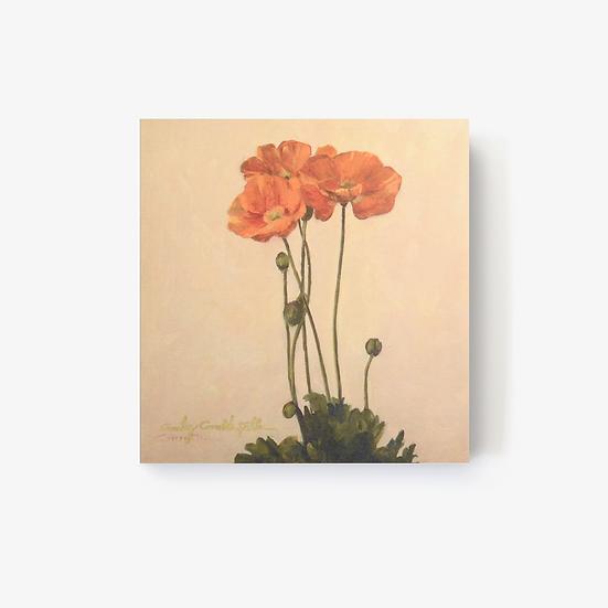 "Poppies - 5x5"" Print"