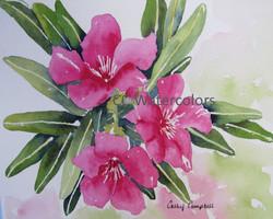 """""""Oleander"""""""