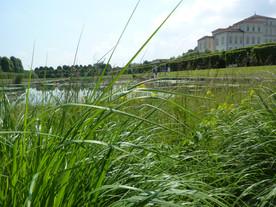 #green, il motto dell'estate