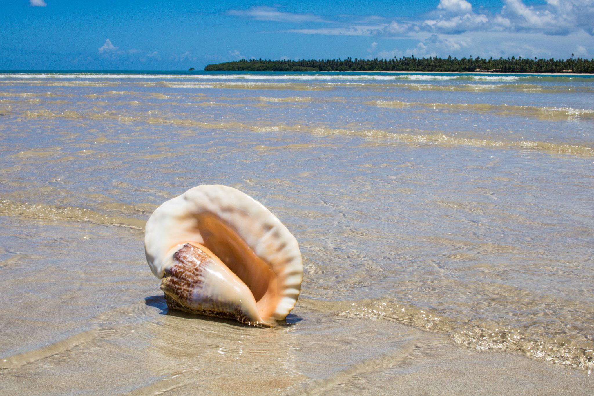 Concha na Praia de Garapuá