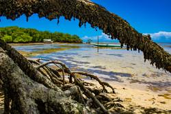 Manguezal de Garapuá - Bahia
