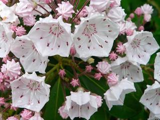 De Rhododendrontuin