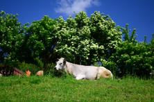 Il benessere animale è la nostra prima preoccupazione. Per questo motivo i nostri animali svolgono spesso attività di pascolo all'aperto