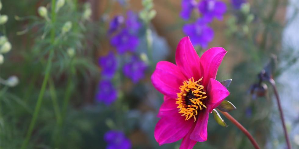 July Garden Talk