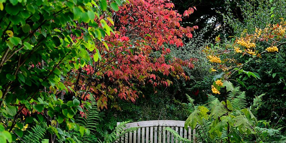 """""""The Autumn Garden"""" - Final Talk at Patthana Garden"""
