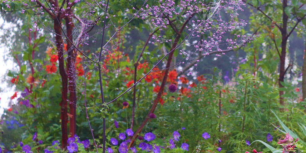 Patthana Garden Full Bloom Celebration and Picnic on the Green