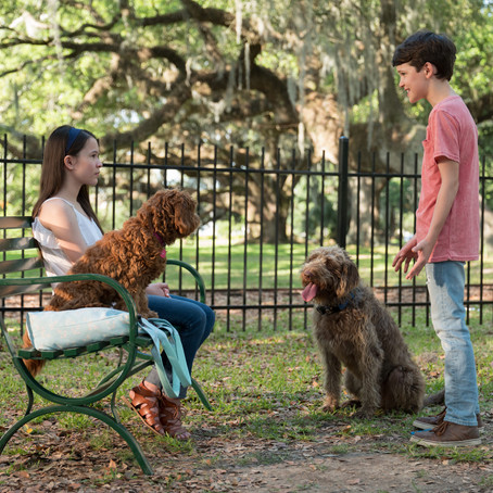 Training The Pups in Think Like A Dog