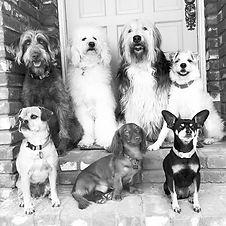 Animal Savvy Dogs