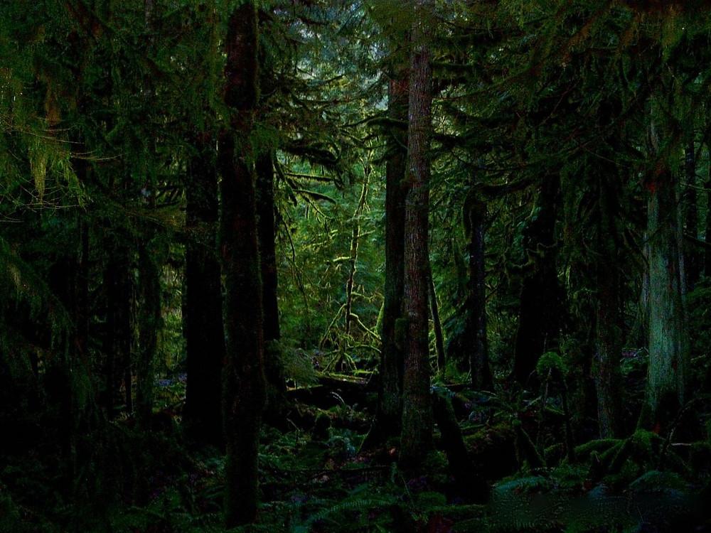 DEEP_FOREST_Wallpaper_ts5mr.jpg
