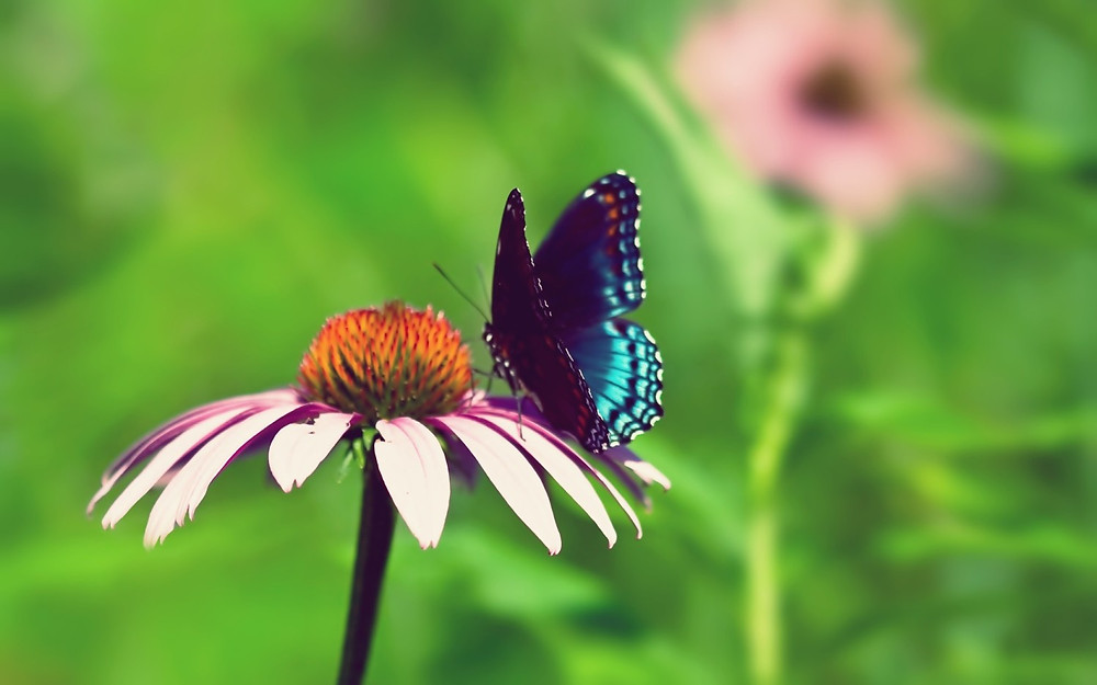 Beautiful-Flower-and-Butterfly-Wallpapers-1500x937.jpg