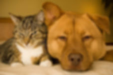 pet tribute cat and dog
