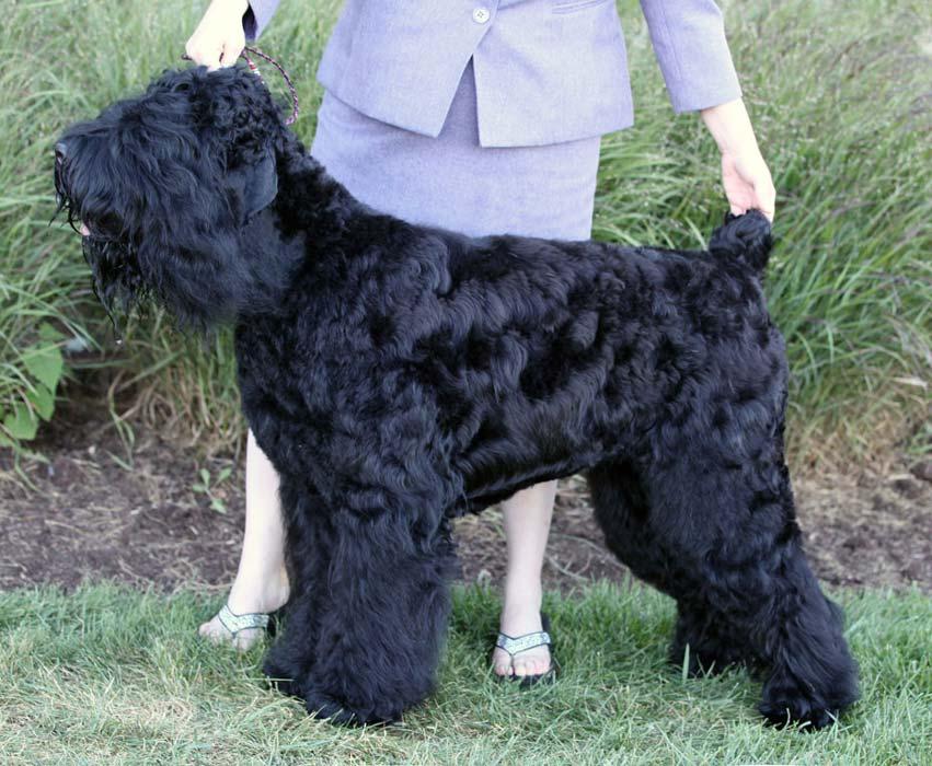 Nox-2-years-old