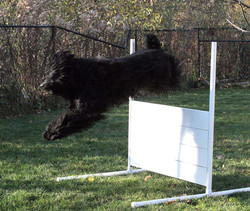 Liberty-jumps