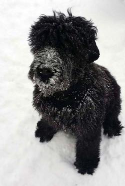 First-snow!