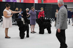 BRTCA-2015-Nationals_working-in-the-ring