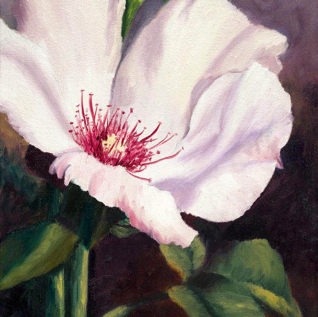 Grandpa's Rose